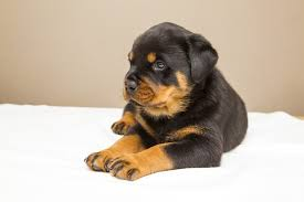 how to get rid of dog odour in your carpet