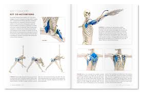 an excerpt from yoga mat panion 1 anatomy for vinyasa flow and standing poses
