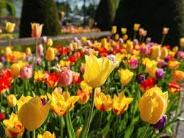 photo keukenhof known as the garden of europe is the place to enjoy