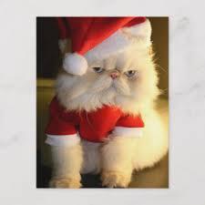 grumpy cat christmas hat. Fine Grumpy Christmas Grumpy Cat In Santa Hat U0026 Suit Holiday Postcard On