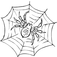 Small Picture Awesome Spider Web Coloring Page NetArt