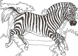 Small Picture Coloring Zebra Pages free printable zebra coloring pages for kids