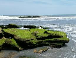 Kure Beach Tide Chart Must Go At Low Tide Picture Of Coquina Outcrop Kure