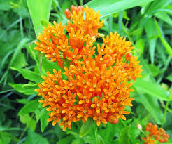 Image result for pa wildflowers