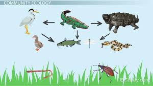 What Is Ecology Definition Explanation Video Lesson