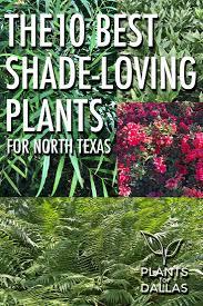 Texas Shade Garden Design 10 Best Shade Loving Plants For North Texas Texas