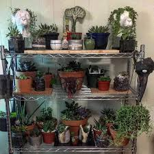 brought in all my plants for the winter it required new shelves and a lot of organizing to fit them all inside but i did i it