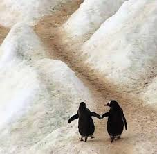 two penguins holding hands. Wonderful Holding Two Penguins Walking  Penguins Holding Hands For Holding Hands S