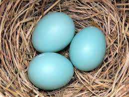 three eggs a beautiful sight