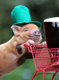 Free download cute pig shopping 4k cute ...