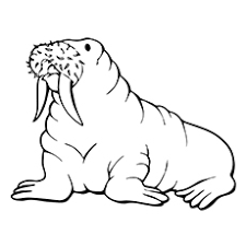 Small Picture Top 10 Free Printable Seal Coloring Pages For Toddlers