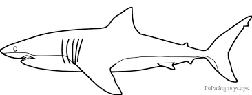 Small Picture Coloring Page Of Shark Shark Coloring Pagesgif Pages Maxvision