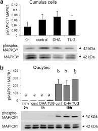 Docosahexaenoic Acid Mechanisms Of Action On The Bovine Oocyte ...