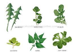 Food Kitchen Food Vegetables Leaf Vegetables 5 Image