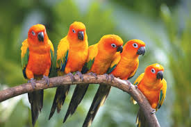 Image result for birds