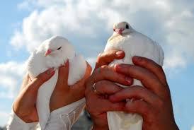 Symbol Holubice Proč Je Holub Mírový Pták