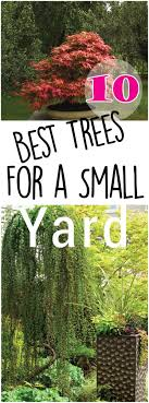 Plants Good For Flooding And Wet Areas  Davey BlogGood Trees For Backyard