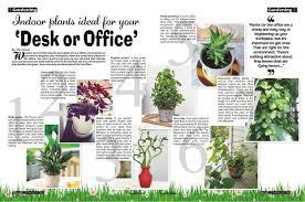 Plants For Office Desk Feng Shui1245 X 825