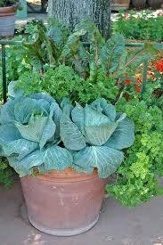 vegetable container garden best container vegetable gardening images on gardening vegetable garden and backyard ideas vegetable container gardening ideas
