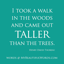 Tall And Beautiful Quotes Best Of My Beautiful Words Taller Than The Trees