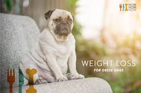Did You Feed The Dog Chart A Weight Loss Guide For Your Obese Dog Nomnomnow