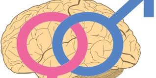 male and female brains wired differently the scientist magazine®