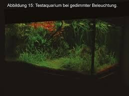 Lovely ... Licht Aus T5 Leuchtstoffröhren Ist Eigentlich Eine Optimale Beleuchtung.  Ein Weiterer Vorteil Der Atmosphärischen Beleuchtung Ist, Dass Die Fische  Davon ...
