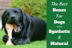 Top 6 Best Dog Bone Reviews 2019 Buying Advice Chewed Bones