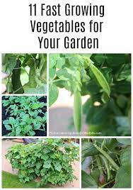 11 fast growing vegetables for your garden