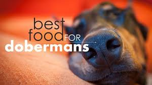 5 Best Dog Food For Dobermans Our Top Picks 2019