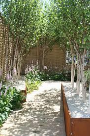 Designer Trees For Small Gardens Silver Birch In Corten Planters Rhs Chelsea Flower Show 2010