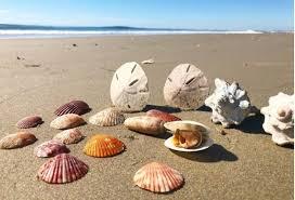 SeashellsBeach