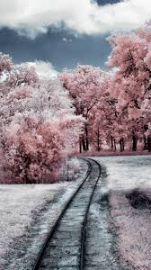 Nature Winter Through Pink Woods iPhone ...