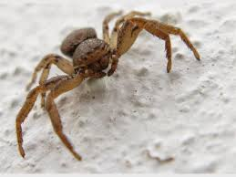 5 Most Dangerous Spiders Zululand Observer