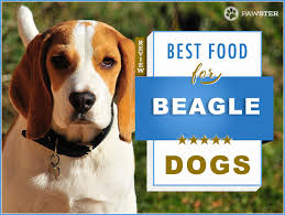 Beagle Puppy Feeding Chart 8 Best Dog Foods For An Adult And Puppy Beagle In 2019