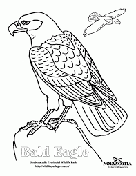 Small Picture Bald Eagle Coloring Page Kids Coloring Bald Eagle Coloring Page In