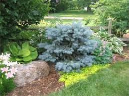 Small Picture Your Gardening Timeline Introduction to Perennial Garden Design