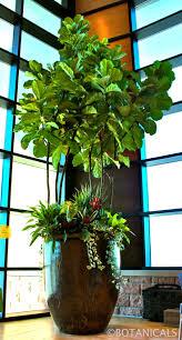 Indoor Tree. http://www.botanicalsdesign.