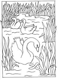 Small Picture Kids n funcom 8 coloring pages of Swans
