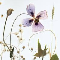 Ainala, Lauri : Immigrant Garden - Record Shop X