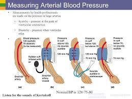 Blood Pressure Diagram Cardiovascular System Blood Vessels Ppt Video Online Download
