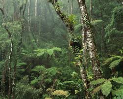 tropical rainforest raining. Interesting Tropical To Tropical Rainforest Raining I