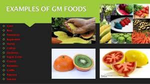 gm food research essay sample essay help custom essay custom essay