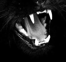 Hasil gambar untuk pinterest tooth cats