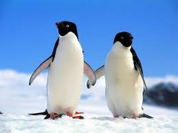 two penguins holding hands. Exellent Holding Community Post 16 Pictures Of Animals Holding Hands On Two Penguins W