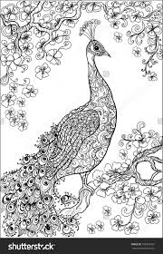 coloring book pages .peacock , flower ,garden | Птицы. рисунки и ...