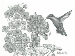 hummingbirds and flowers drawing. Brilliant Hummingbirds Birds Drawing  Hummingbird By Sharon Blanchard For Hummingbirds And Flowers M