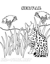 african serval cat coloring pages 003 me jpg