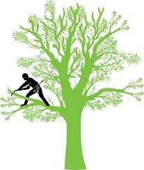 """Résultat de recherche d'images pour """"elagage arbre"""""""