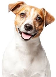 Compare the best dog insurance plans from top pet insurance providers. Award Winning Lifetime Pet Insurance Agria Pet Insurance